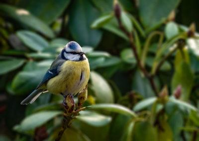 Garten-Fauna